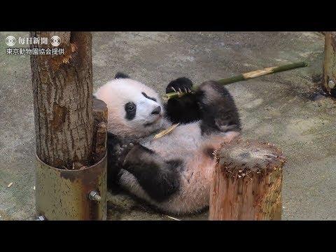 上野パンダ:シャンシャン生後207日(提供映像)