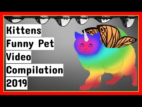 Kittens Funny Pet Video Compilation 2019. [PET AREA 51]