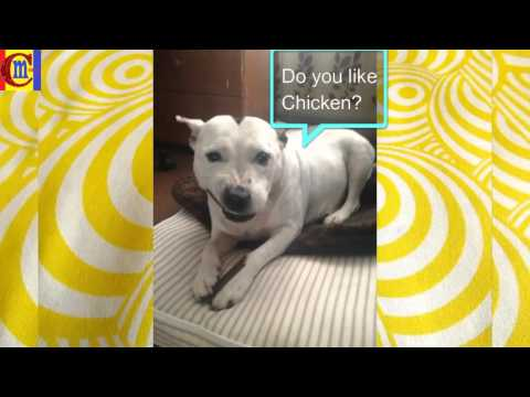 funny dog photos - cute funny dogs