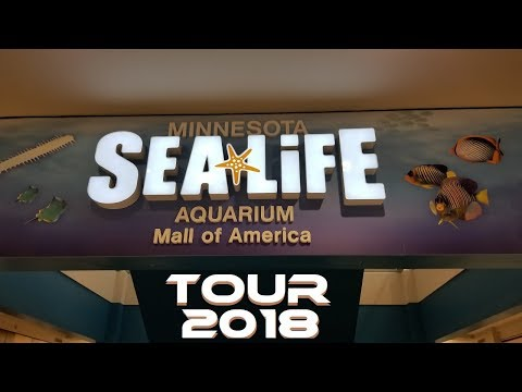 MALL OF AMERICA | SEA LIFE AQUARIUM | TOUR 2018