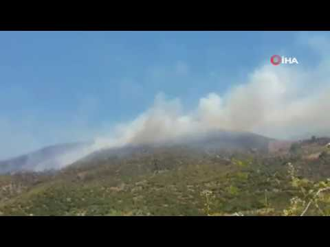 Ödemiş'te orman yangını