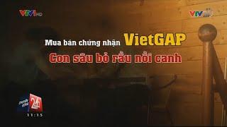 Mua bán chứng nhận VietGap - Con sau bỏ rầu nồi canh | VTV24