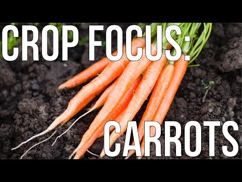 Download Youtube: HOW TO GROW ORGANIC CARROTS