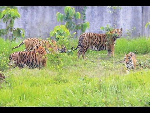 """► """"Gazipur Safari Park"""" - Bangabandhu Safari Park - Dhaka, Bangladesh"""