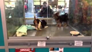 Продажа щенков в зоомагазине в Москве