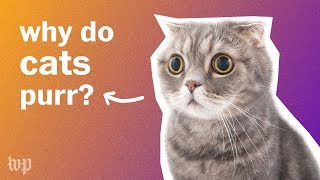 Why do cats purr? | Anna's Science Magic Show Hooray!