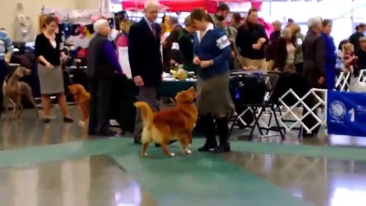 Whidbey Island Dog Show