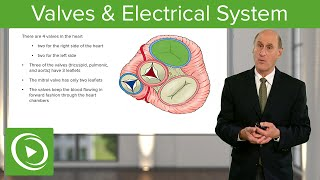 Valves & Electrical System – Cardiology | Medical Education Videos