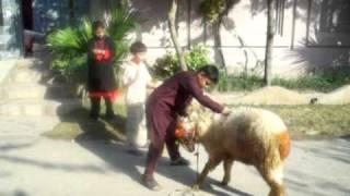 arham masti.animal love.animal.