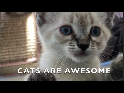 NATIONAL CAT DAY 2016 MUSIC VIDEO   Cats are Awesome!