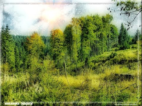 Видео, Звуки природы медитация леса  пение птиц полная версия