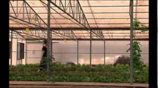 Organic farming in the UAE