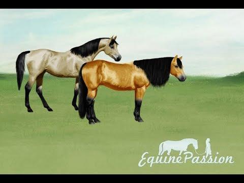 equinepassion