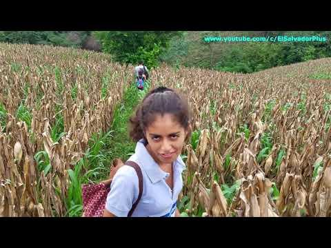 7 Vamos Cuesta Abajo - Caminata Al Rio San Jose El Naranjo Parte 7