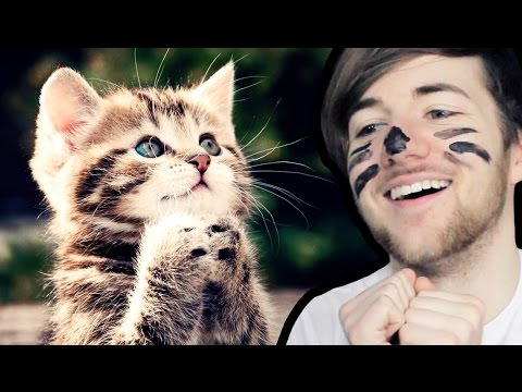 THE TOP 10 CUTEST CATS ON THE ENTIRE INTERNET 🐱
