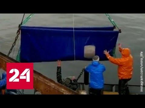 'Китовая тюрьма' в Приморье опустела - Россия 24 - Видео онлайн