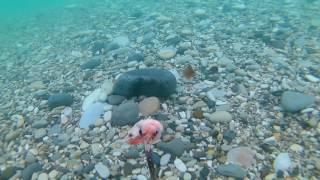 Eken H9R 1080p рыбалка на креветку