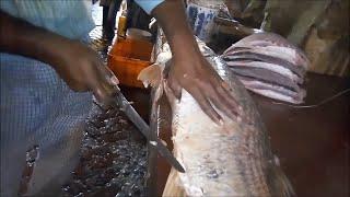 20 Kg Big Vetki Fish Cutting & Slicing l Amazing Technique of Big fish cutting