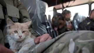 Суровые Донбасcовские Коты и Кошки,война коснулась не только людей,но и животных!