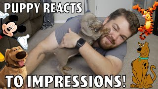 Doing Impressions for my Puppy