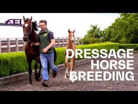 The Breeding Of Dressage Mares | Equestrian World