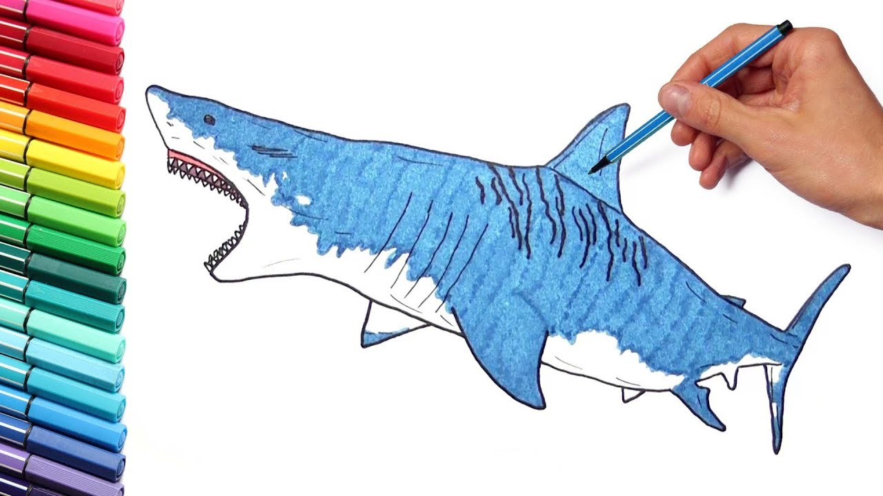 Coloring Pages For Kids Learn Colors With Shark How To Draw Sea