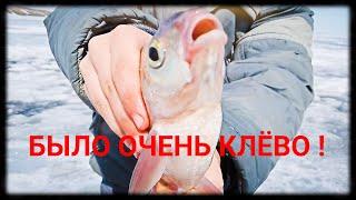 Рыбалка Самаркандское водохранилище