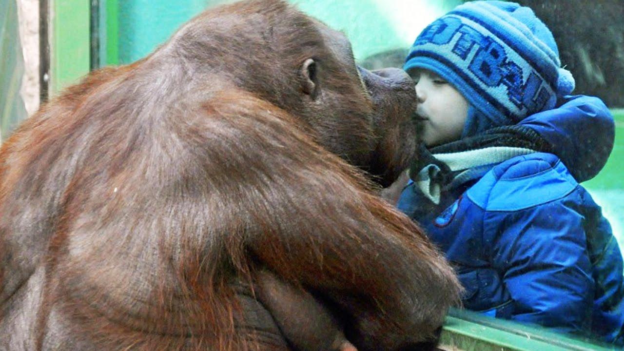 Повышение должности, смешные картинки из зоопарка
