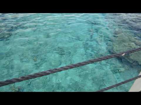 Rotes Meer Ägypten Unterwasseraufnahmen Delfine Schildkröte Korallen Riff Fische Egyptиз YouTube · Длительность: 6 мин1 с