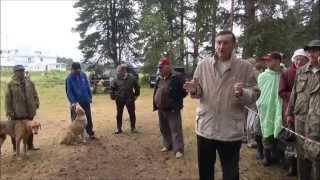 «65 Кировская областная   выставка охотничьих собак». Ринги гончих.