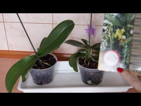 Осмотр растений. Палочки с микоризой.