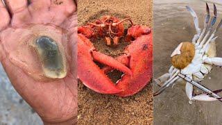 해안에서 위대하고 독하고 기이 한 해산물 잡기 67 회…