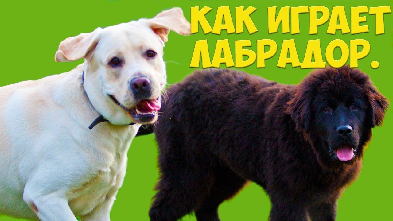 Натуральная еда для собак декоративных пород - YouTube