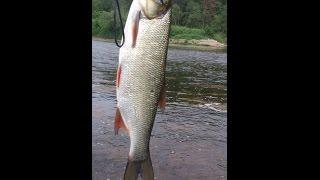 Рыбалка на головля на реке Ай в Челябинской области, часть 9