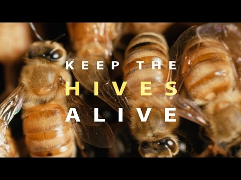 Keep the Hives Alive (Full Documentary)