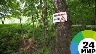 Жителей Молдовы начали кусать клещи - МИР 24