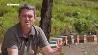 Épicerie Fine - Découverte d'un précieux nectar : Le miel de Corse