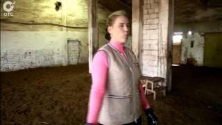 В Новосибирской области появился на свет уникальный жеребёнок тракененской породы