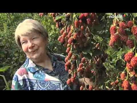 Le Jardin Foret En Permaculture Ou Foret Comestible Des