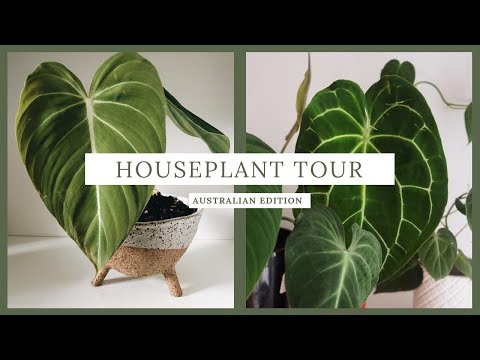 house plant tour // aroid collection