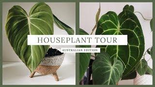 house plant tour // aroid collection