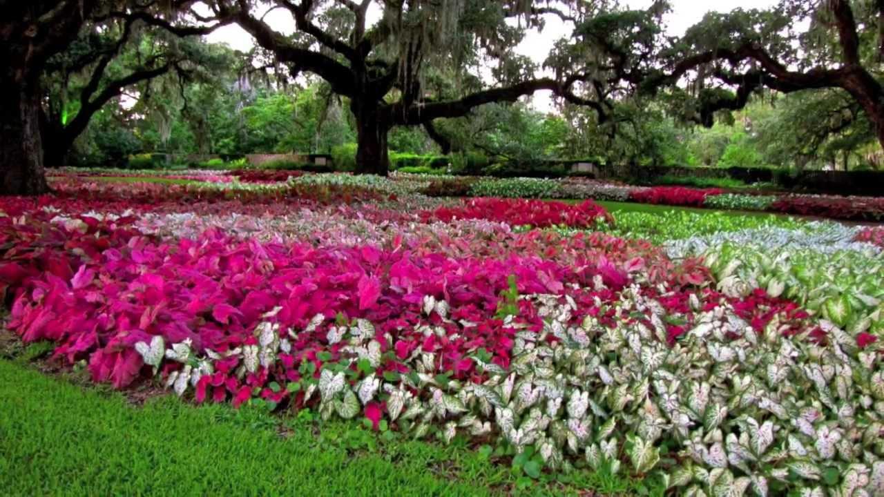 Among The Caladiums Brookgreen Gardens   YouTube
