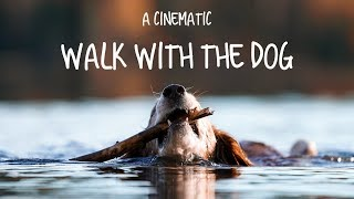 A cinematic walk with the dog