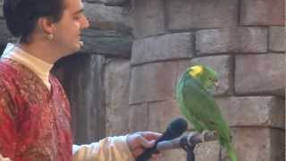 Animal Kingdom - Oiseau chanteur II