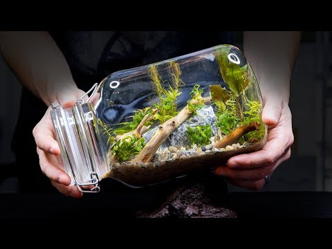 Sealed Aquarium Ecosphere (Aquascape In A Jar)