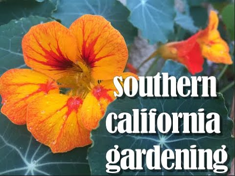 Southern California Gardening Introduction