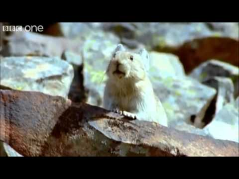 Best of... BBC Talking Animals