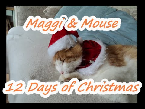 NORWEGIAN FOREST CAT & MY FAMILY, 12 DAYS OF CHRISTMAS COMPILATION
