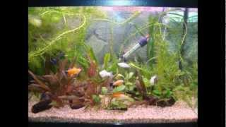 Diy Aquarium Canopy