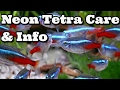 Neon Tetra Care, Information and advice